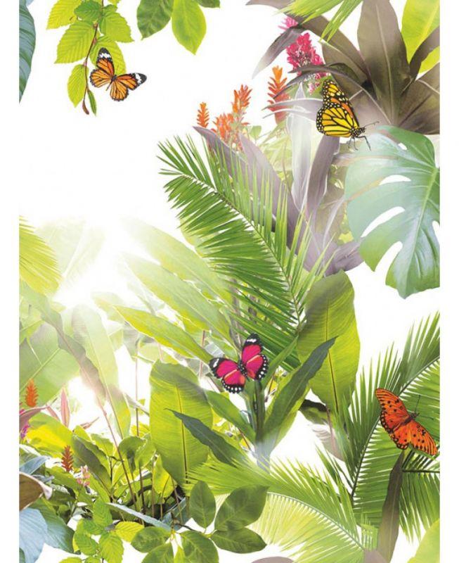 AMAZONIA CITRUS