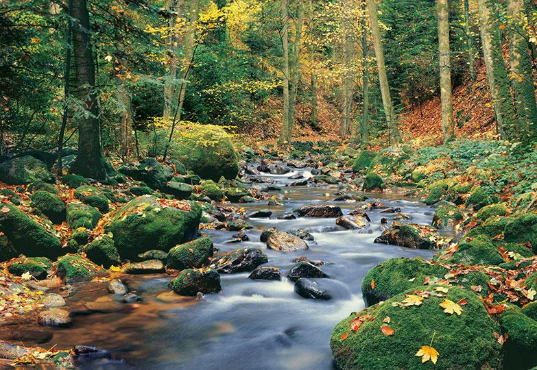 FOREST STREM