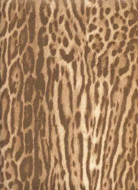 AFRICAN COPPER LEOPARD